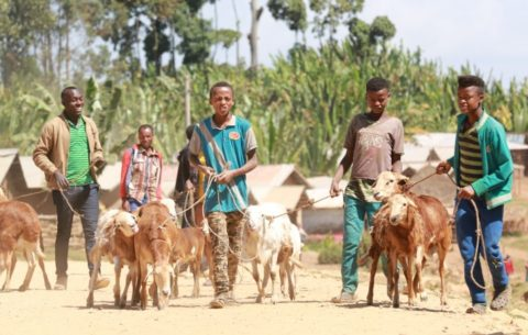 From the field to academia: Ethiopian livestock breeders advocate for reform of university curricula